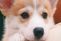 独一无二的狗狗名字