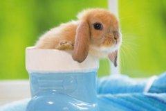 温顺娴静宠物兔兔的名字