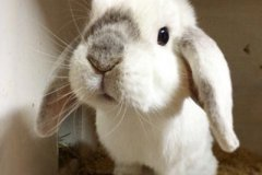 独一无二的兔子名字