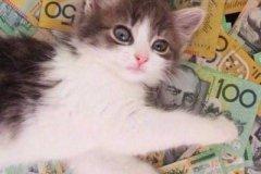 小母猫名字可爱洋气