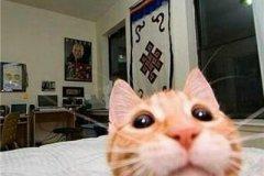 淘气的宠物猫名字