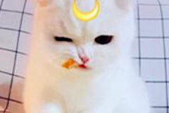 良善温和独一无二的猫咪名字