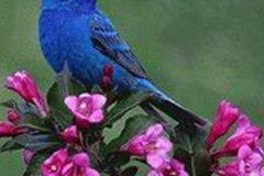 宠物鸟名字可爱