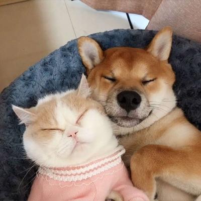 狗狗和猫猫的情侣头像