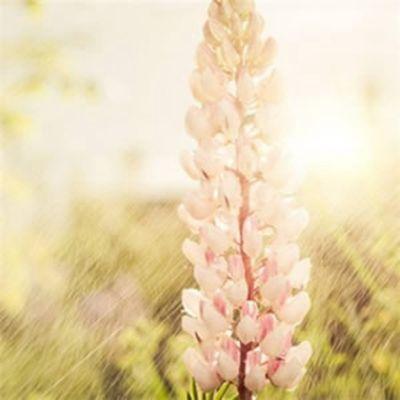 高清微信头像风景花朵图片意境图片素材