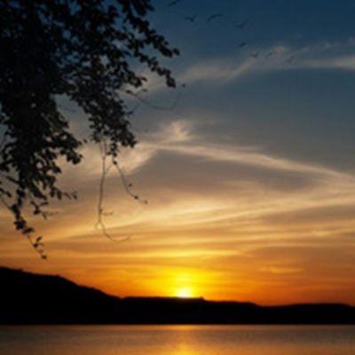 唯美阳光与树风景图片头像