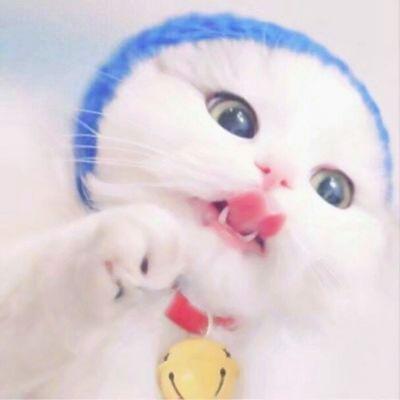 超可爱猫咪头像图片大全