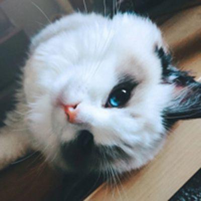猫咪可爱头像
