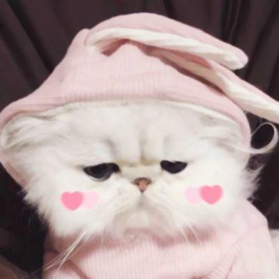 带猫的高清情侣头像