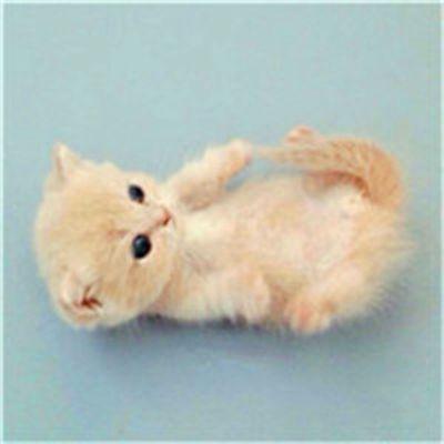 好看可爱的小猫咪头像