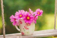 春天踏春赏花的优美诗句句子